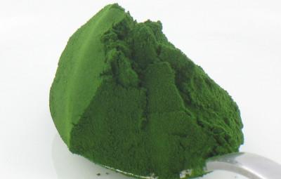 Chlorella-Alga-Polvere-Biologica